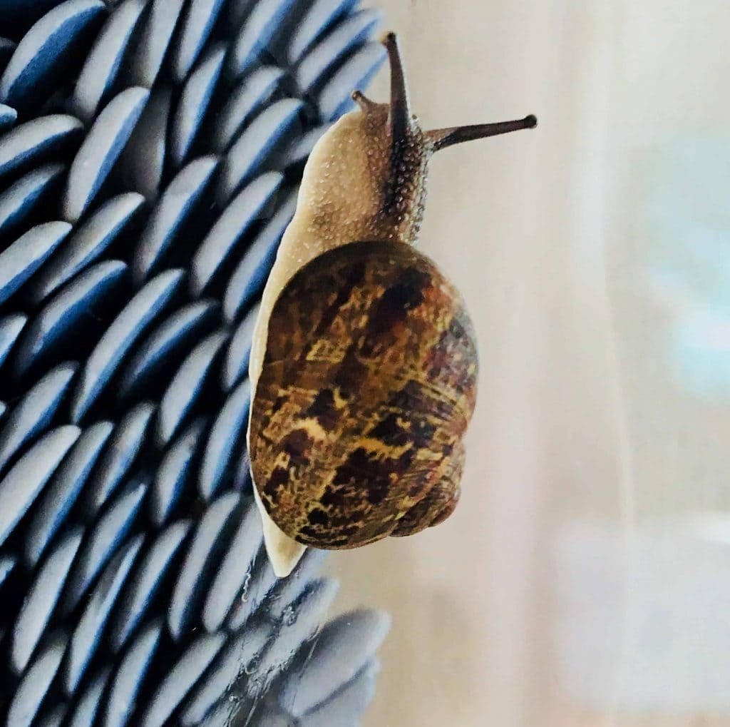 """Flow"" by Fenella Elms featured in ""In Praise of Slowness and All Things Snails."""