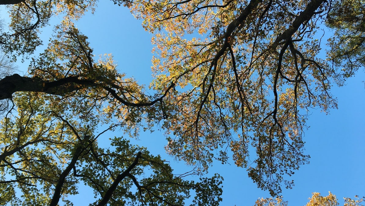 """Looking up at trees. Photograph by Ellen Vrana featured in Peter Mayle's """"A Year in Provence"""" in the Examined Life Library."""