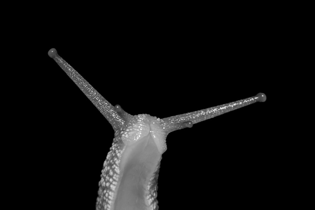 """Garden snail, Sussex. Photograph by Joshua Burch. Featured in Marianne Moore's """"Observations"""" in The Examined Life Library."""