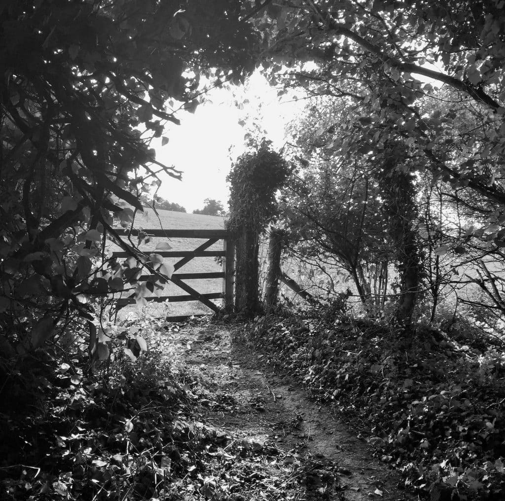 Field gate, Sussex