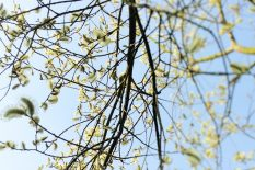 Cruelty and Falsity of Spring