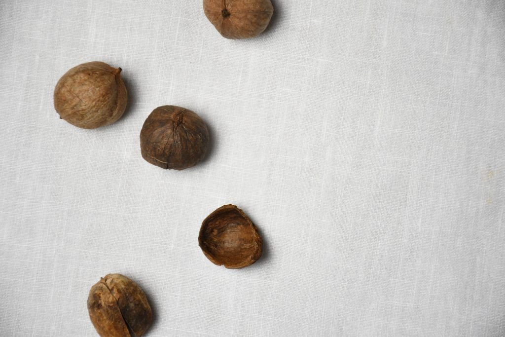 "Shells of hickory nuts. ""Things We Cannot Abandon."""