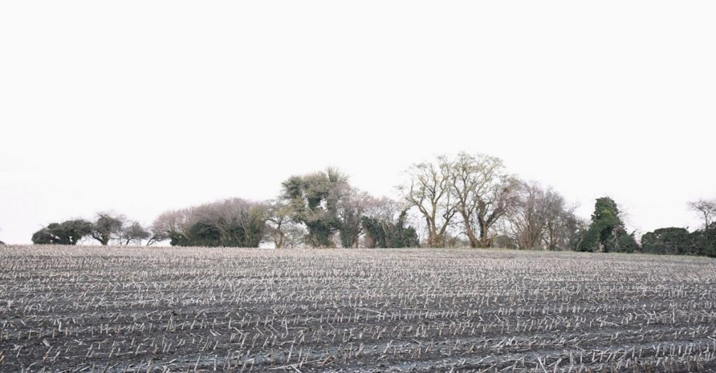 "Sussex field, winter. Featured in David Whyte's ""Consolations"" in The Examined Life Library."