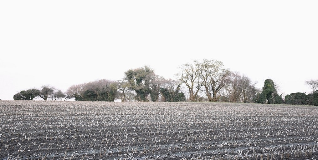 """Sussex field, winter. Featured in David Whyte's """"Consolations"""" in The Examined Life Library."""