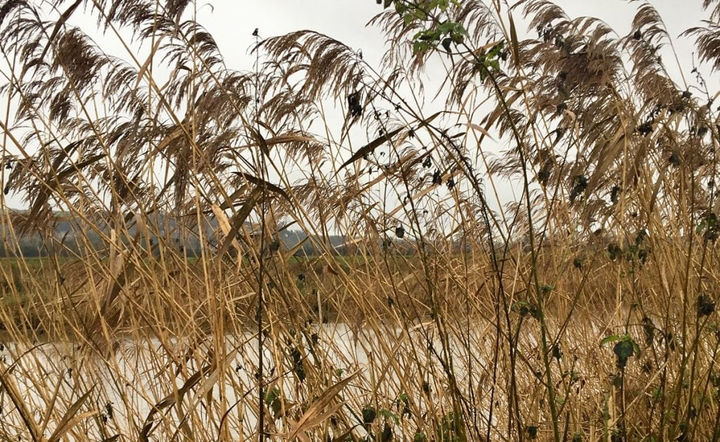 "Reeds next to River Arun. Featured in Mary Oliver's ""Why I Wake Early"" in the Examined Life Library."