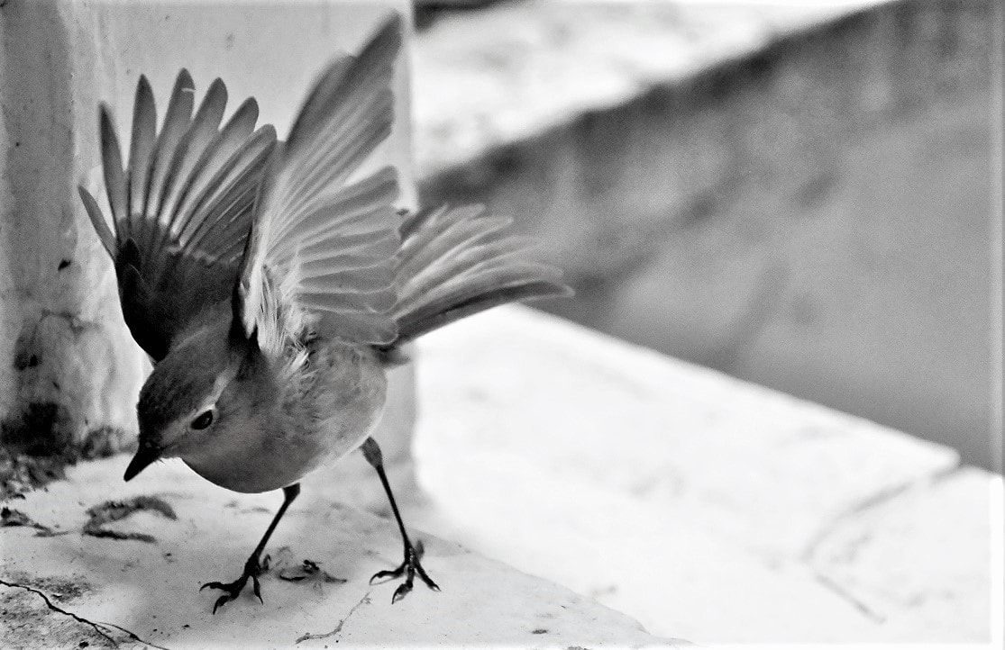 """Bird II. Featured in Anne Lamott's """"Bird by Bird"""" in the Examined Life Library."""
