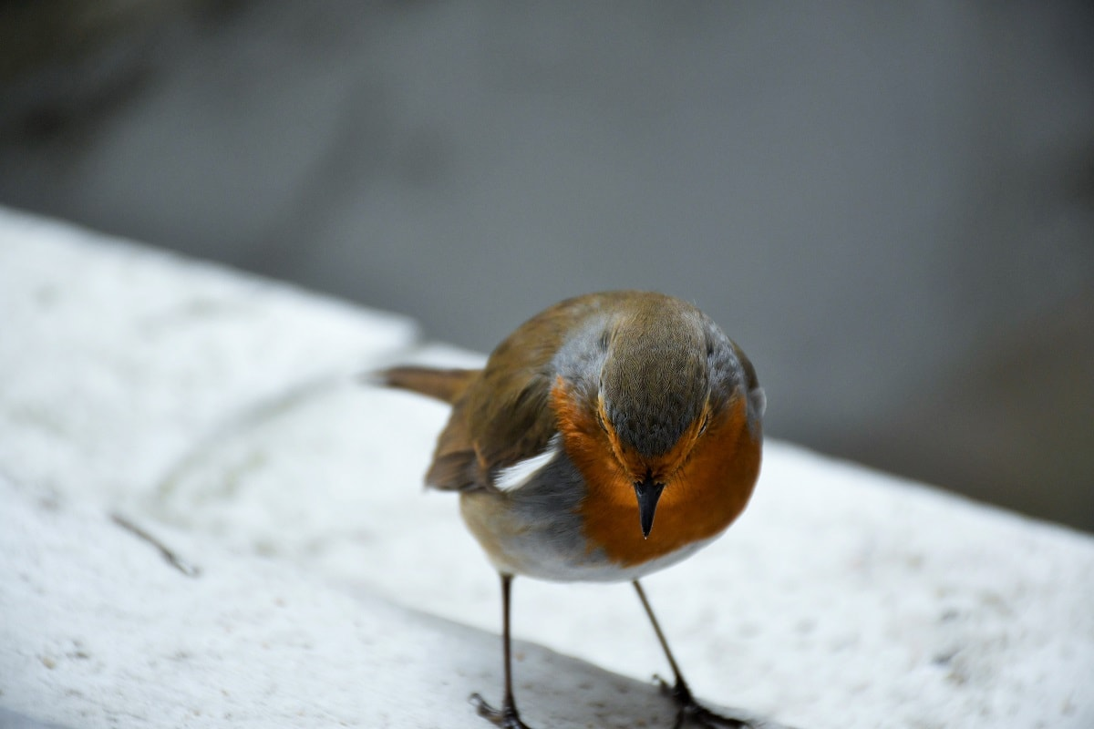 """Bird. Featured in Anne Lamott's """"Bird by Bird"""" in the Examined Life Library."""
