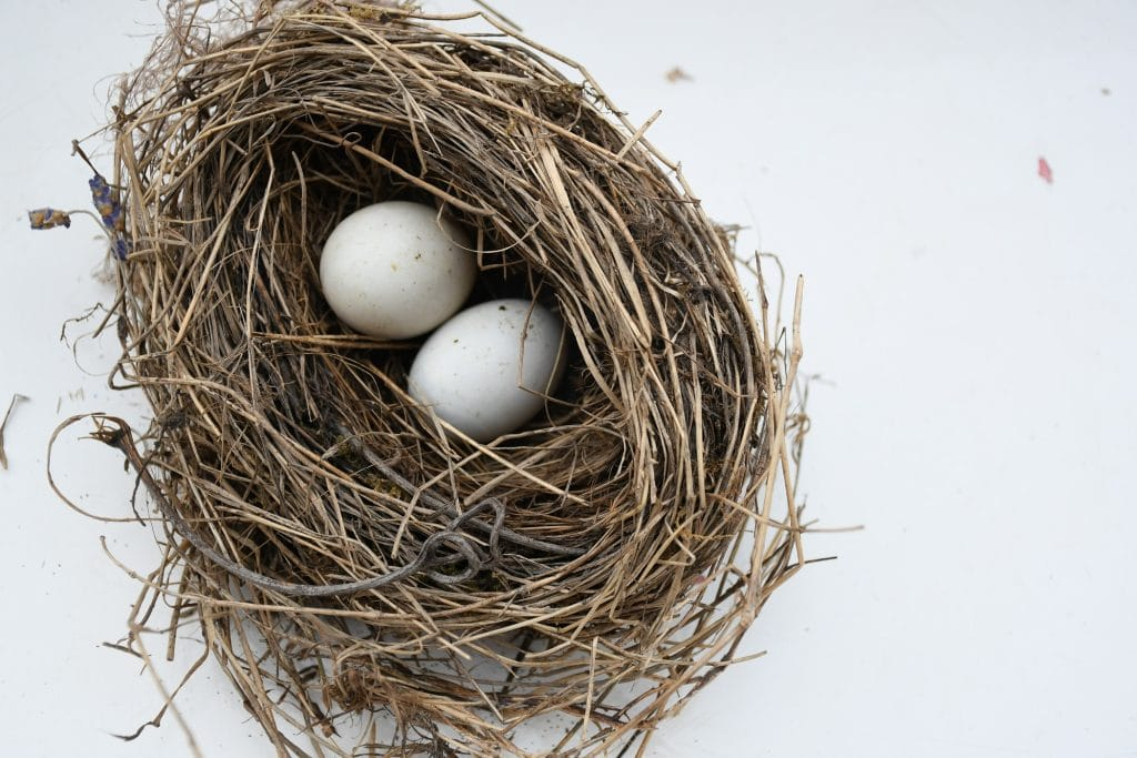 """Bird nest. Featured in Paul Nurse's """"What is Life?"""" in the Examined Life Library."""