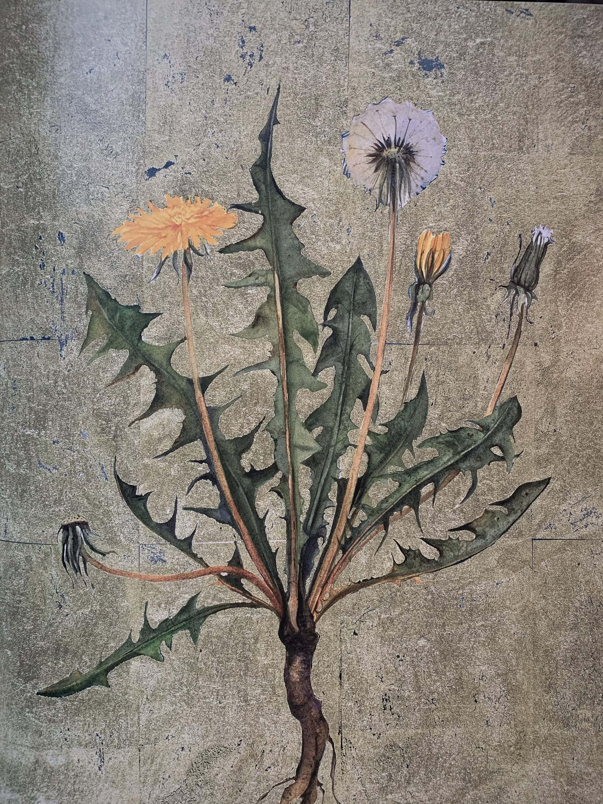 """Dandelion. Illustration by Jackie Morris in """"The Lost Words"""" in the Examined Life Library."""