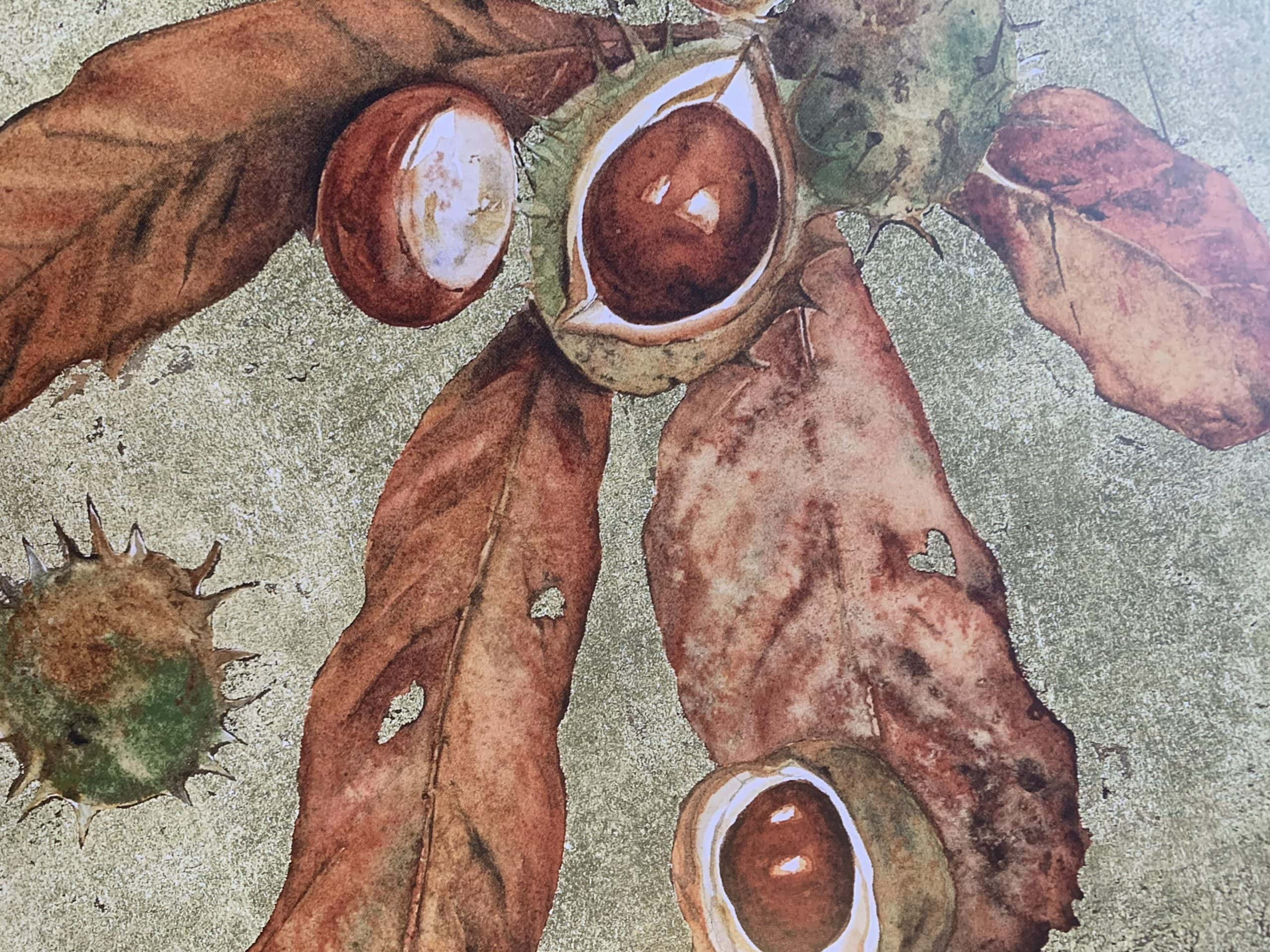"""Conkers. Illustration by Jackie Morris in """"The Lost Words"""" in the Examined Life Library."""