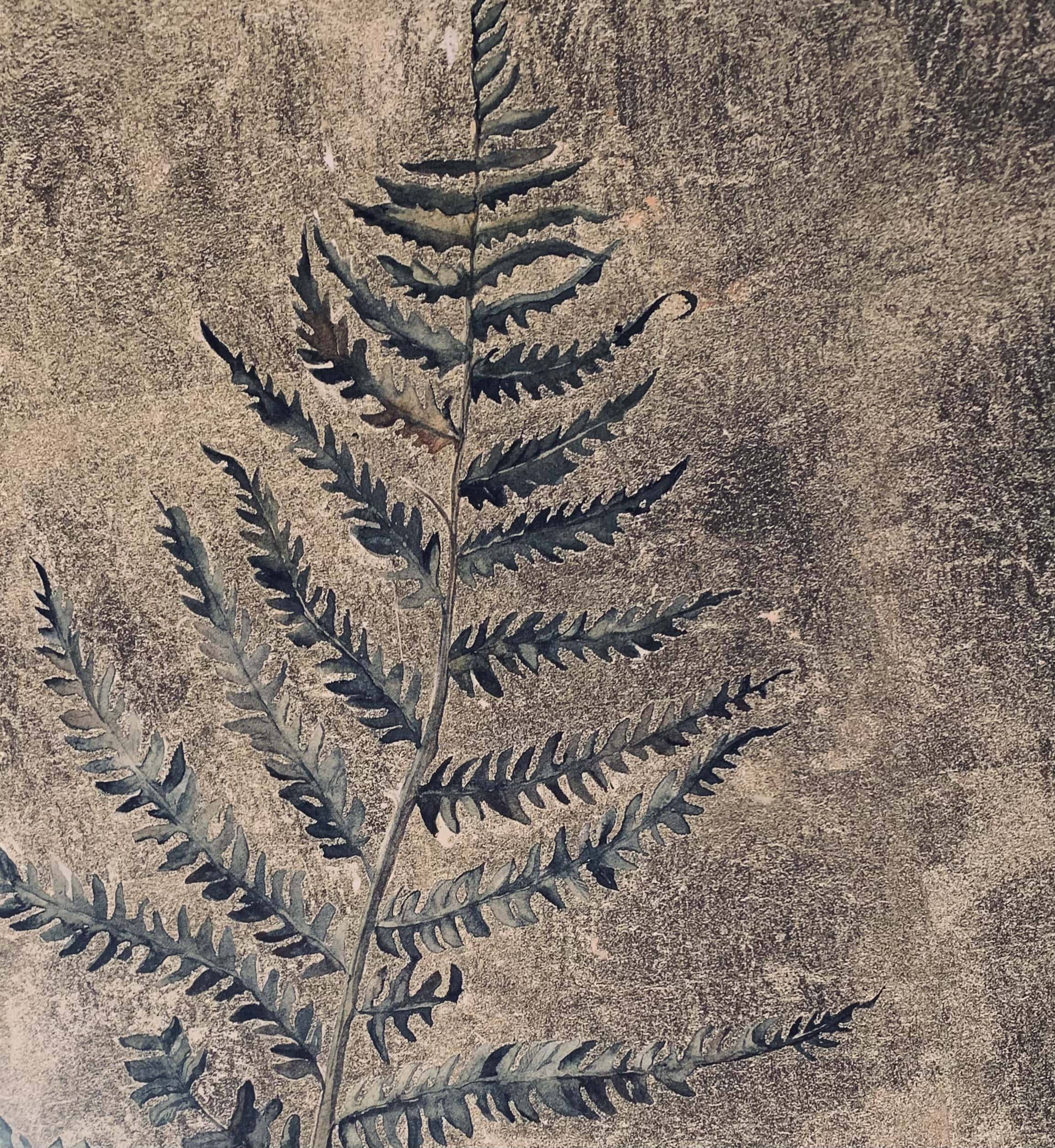 """Fern. Illustration by Jackie Morris in """"The Lost Words"""" in the Examined Life Library."""