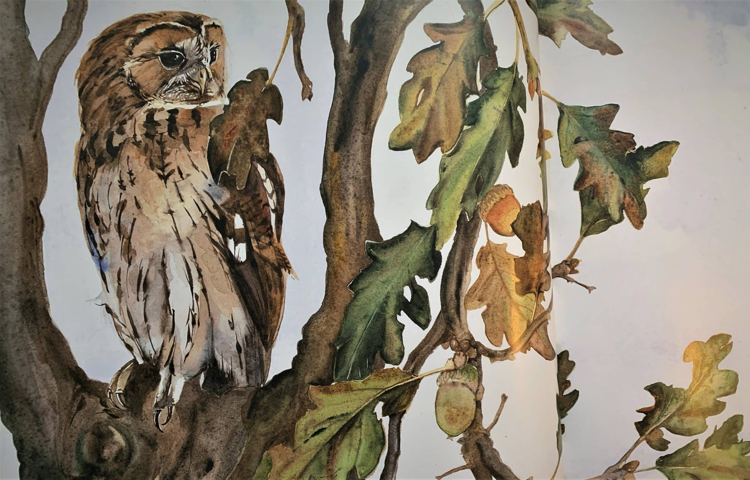 """Owl. Illustration by Jackie Morris in """"The Lost Words"""" in the Examined Life Library."""