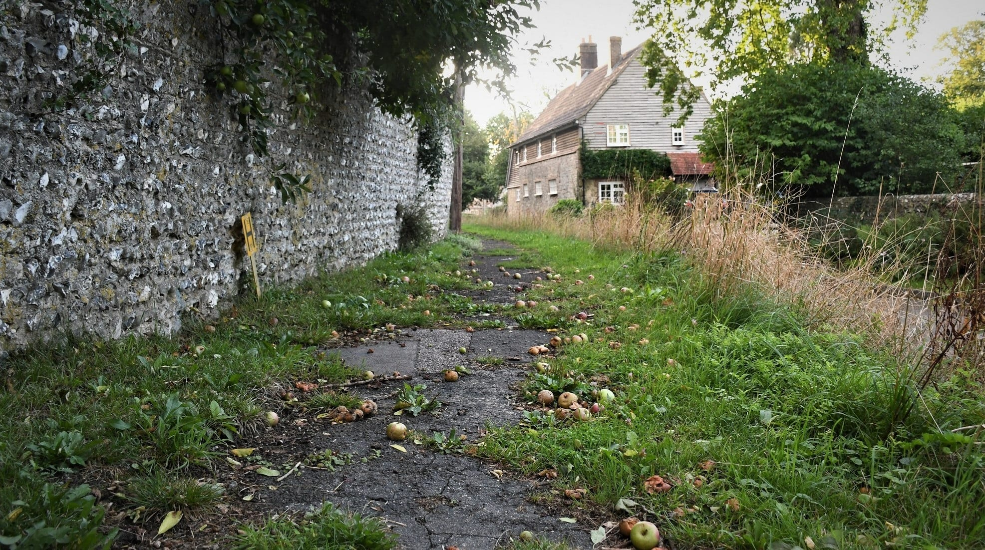 """Fallen apples featured in Laurie Lee's """"Cider with Rosie"""" in the Examined Life Library."""