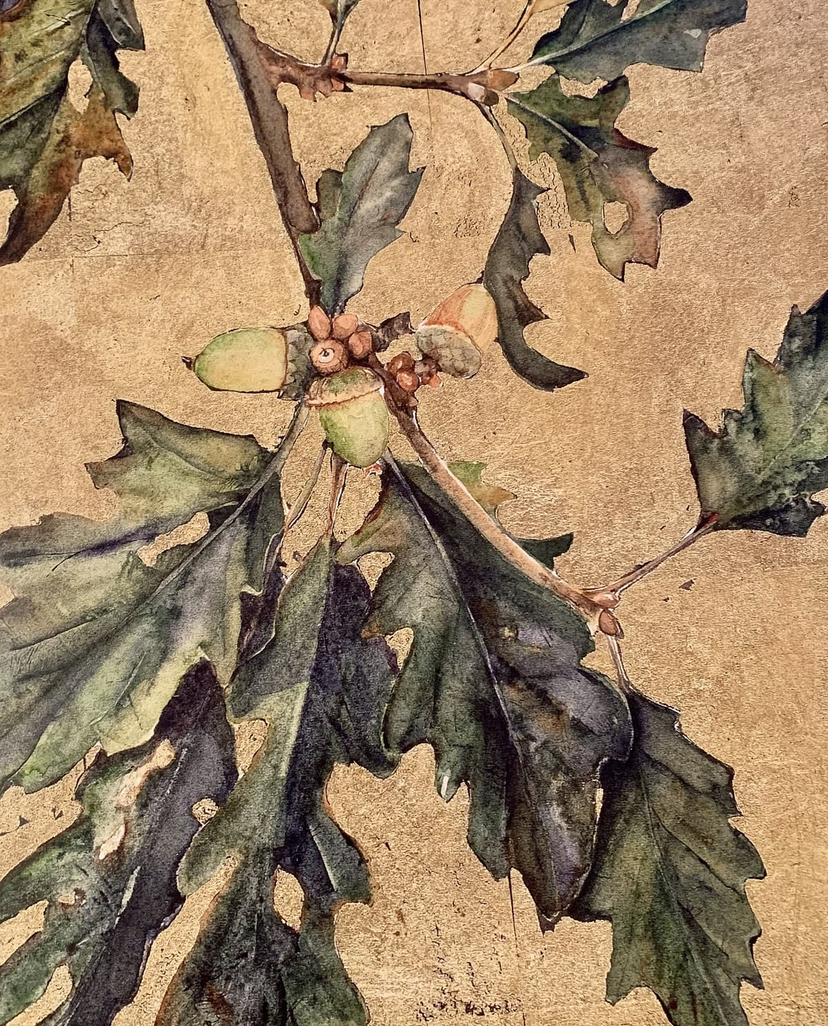 """Acorns. Illustration by Jackie Morris in """"The Wild Places"""" in the Examined Life Library."""
