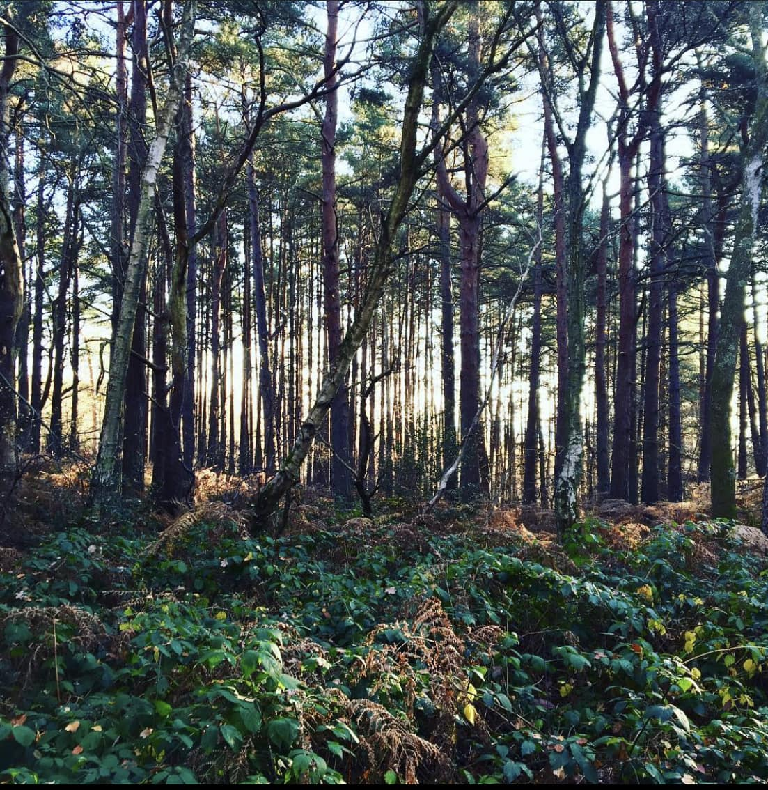 """Photograph of Sussex forest by Ellen Vrana. Featured in Wendell Berry's """"Our Only World"""" in the Examined Life Library."""
