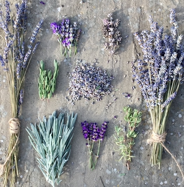 """Photo of lavender. Featured in Emma Mitchell's """"The Wild Remedy"""" in the Examined Life Library."""